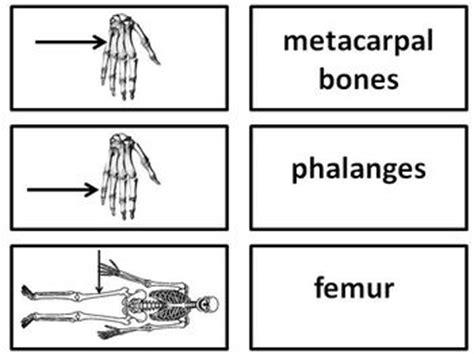 Anatomy Flash Cards Printable