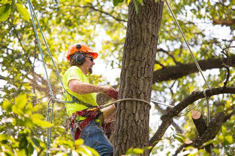 tree trimming mike s tree service tree trimming