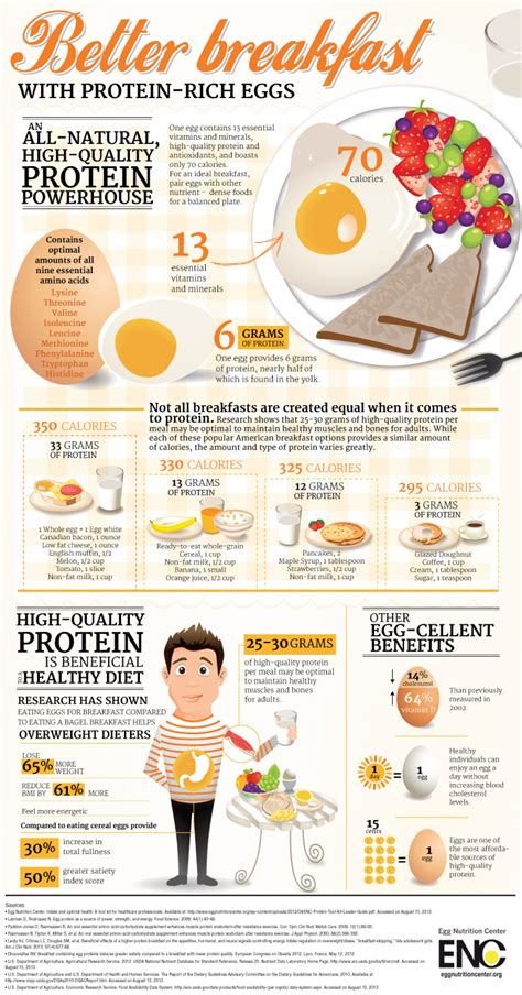 protein one egg better breakfast with protein rich eggs visual ly