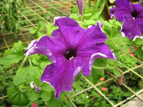 list of garden flowers common names garden plants flowers philippines 25812 garden flowers