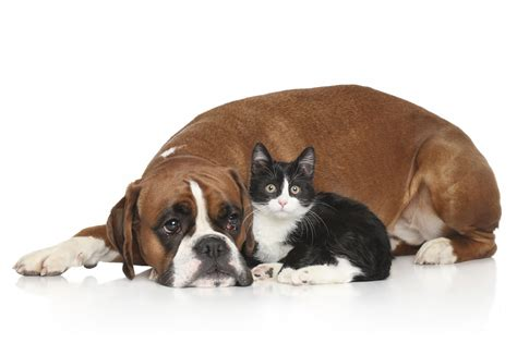can dogs and cats breed cat friendly breeds animal friends