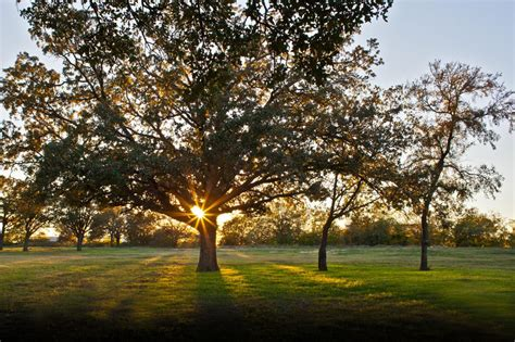 The Evening News Courtesy Of Magazine Mound by Flower Mound Officials Fear Tree Ordinance Could Be At