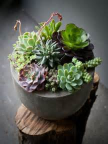 Ideas For Indoor Succulents Design 35 Awesome Succulents Garden Ideas Home Design And Interior