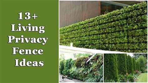 13 living privacy fences ideas