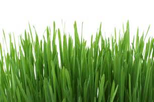 Fresh grass free stock photo public domain pictures