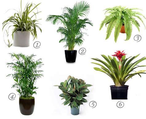 cat safe house plants  cleaner air urban gardening