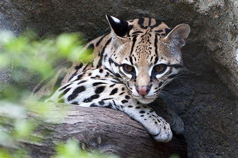 imagenes de animales zoo 13 grandes consejos para hacer mejores fotos en el zoo