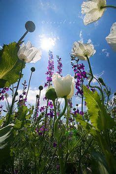 imagen de una hermosa rosa blanca para whatsapp imagen de una hermosa rosa blanca para whatsapp imagenes