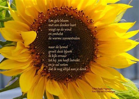 gedicht toon hermans bloem afbeeldingsresultaat voor gedicht zonnebloem toon hermans