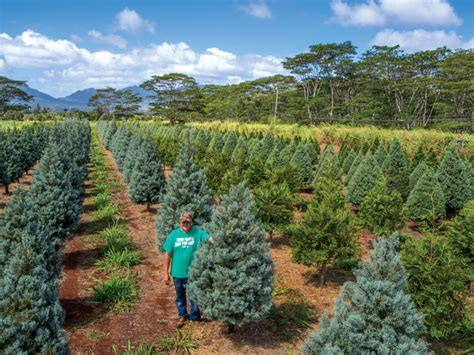 watch honolulu magazine s festive christmas tree adventure