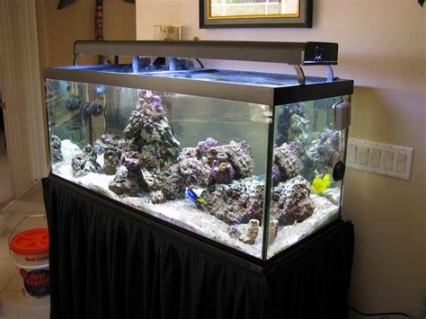 aquarium design pic decoration small saltwater aquarium design ideas