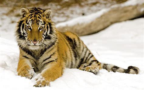 imagenes animales gratis solo fondos de pantalla gt animales
