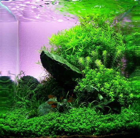nano aquascaping 1000 ideas about aquarium backgrounds on pinterest