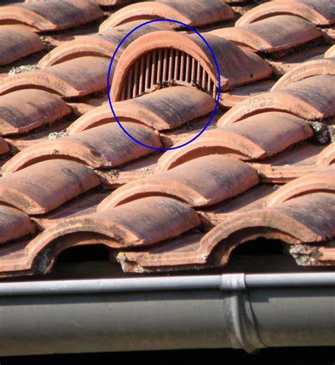 nid de frelons sous les tuiles sentinelles frelon asiatique sur toiture aaafa