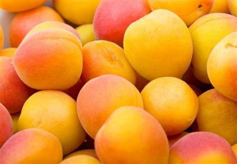 apricots celebrate national apricot day every day with 40 sweet fruity recipes books 7 best summer fruits pinoria