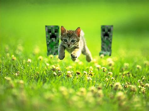 cat chases creeper chasing cat