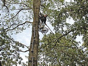 how to set up tree stand how to trim shooting lanes for
