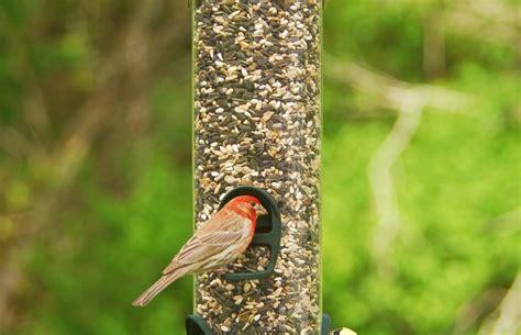 wild birds unlimited choosing the best bird seed
