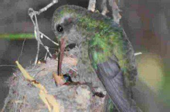 frequently asked questions about attracting hummingbirds
