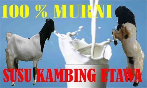 susu kambing etawa jakarta jual susu kambing etawa  jakarta