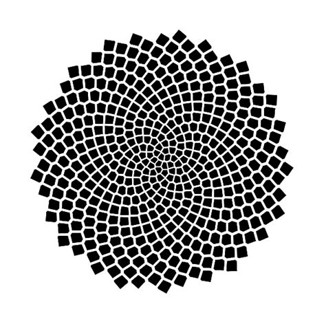 pattern of geometric sequence fibonacci numbers of sunflower seed spirals national