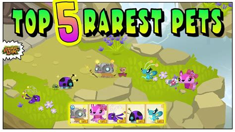 top  rare pets  animal jam youtube