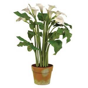 ch furniture white calla lily plants in clay pot
