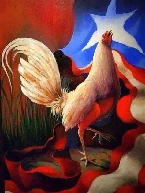 pelea de gallos en cupey san juan pr foto ang233lica allen peleas de mi isla querida puerto rico puerto rico images
