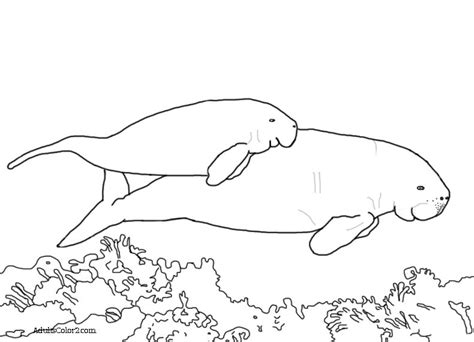 manatee line art www imgkid com the image kid has it