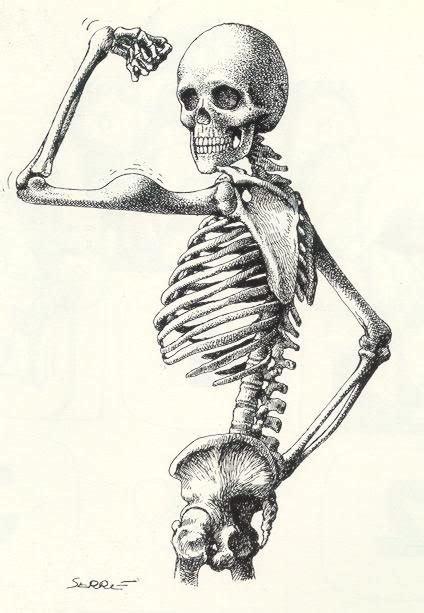 pelvis esqueleto humano frente cibertareas 25 melhores ideias de esqueleto humano no pinterest