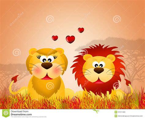 imagenes de leones romanticos leeuwen in liefde stock illustratie illustratie bestaande