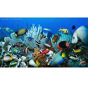 Related Pictures Coral Fish Reef Underwater Wallpaper 3478x2327