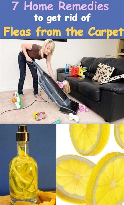 home remedies to kill lice on furniture 28 images how
