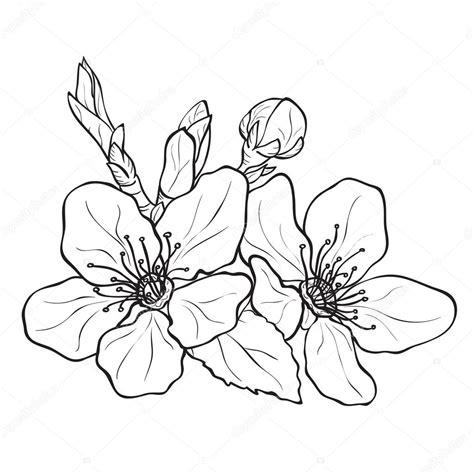 disegno fiore di ciliegio fiori fiori di ciliegio disegno vettoriali stock
