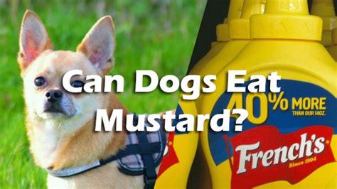 can dogs eat mustard can dogs eat mustard pet consider