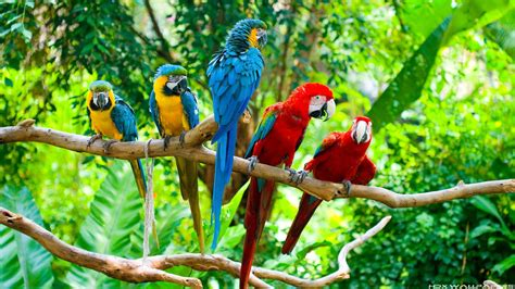 Wallpapers Macaw Bird Wallpapers | macaw parrot wallpapers wallpaper cave
