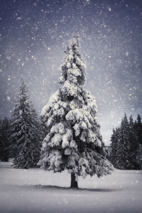 where to buy christmas trees in montgomery county