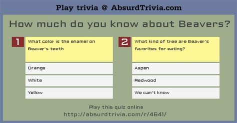 Trivia quiz how much do you know about beavers