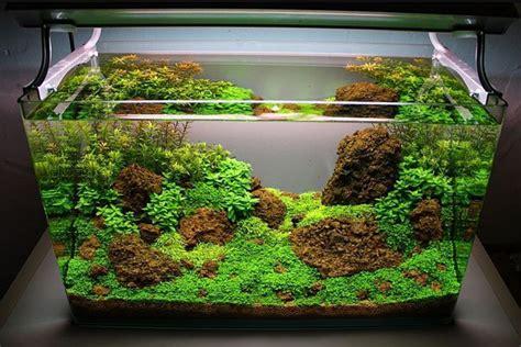 aquascape design jakarta hobi berkebun di aquarium ini wadah pecinta aquascape