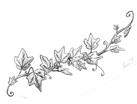 Drawing Vines by Vine Drawings Cliparts Co