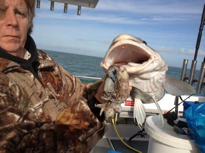fishing boat hire hayling island valkyrie charter boat fishing hayling island the cod