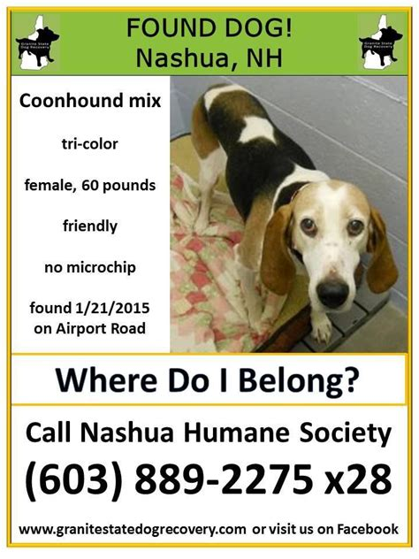 granite state recovery 133 best found dogs nh images on