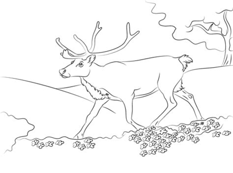 fail tail coloring pages coloring coloring pages