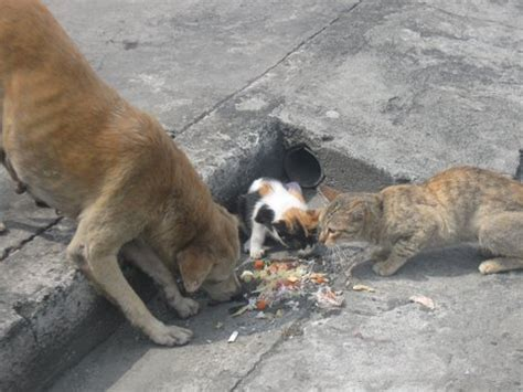 how to a stray how to take care of a stray cat dinzie