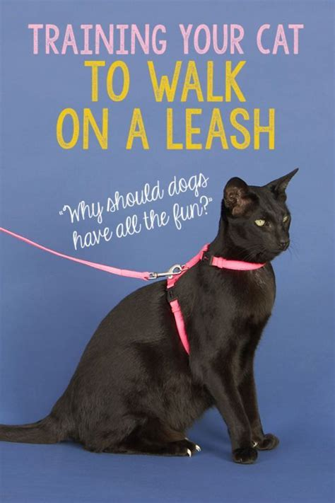 out on a leash how terryã s gave me new books best 25 sphynx kittens for sale ideas on