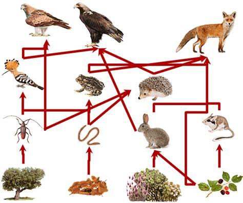 importancia de las cadenas alimenticias y redes troficas biolog 237 a y geolog 237 a 2 186 eso los ecosistemas composici 243 n