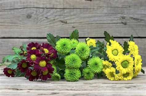 i fiori di sanremo quali fiori per il festival di sanremo pollicegreen