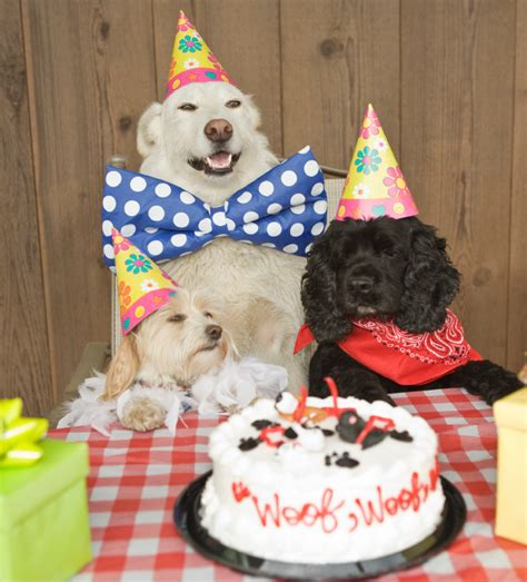 Birthday Cake Dog Meme - happy birthday sklover working wisdom