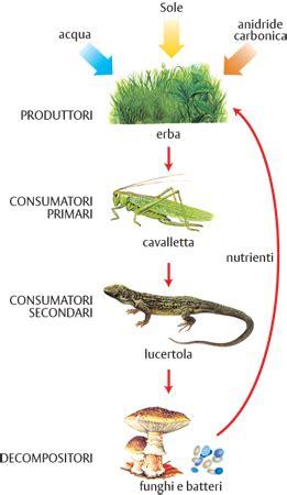 la catena alimentare spiegata ai bambini la componente biotica degli ecosistemi