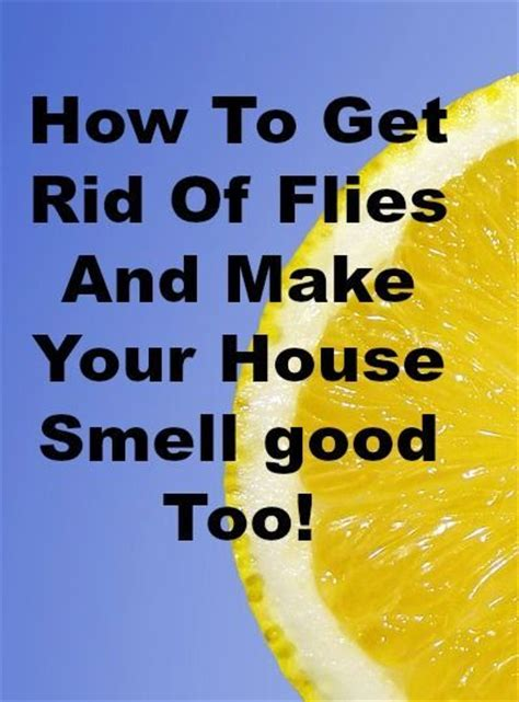 17 best images about household tips on pinterest roaches
